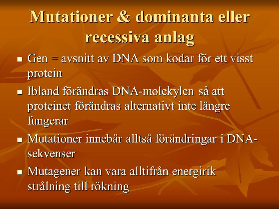 Mutationer & dominanta eller recessiva anlag Gen = avsnitt av DNA som kodar för ett visst protein Gen = avsnitt av DNA som kodar för ett visst protein Ibland förändras DNA-molekylen så att proteinet förändras alternativt inte längre fungerar Ibland förändras DNA-molekylen så att proteinet förändras alternativt inte längre fungerar Mutationer innebär alltså förändringar i DNA- sekvenser Mutationer innebär alltså förändringar i DNA- sekvenser Mutagener kan vara alltifrån energirik strålning till rökning Mutagener kan vara alltifrån energirik strålning till rökning