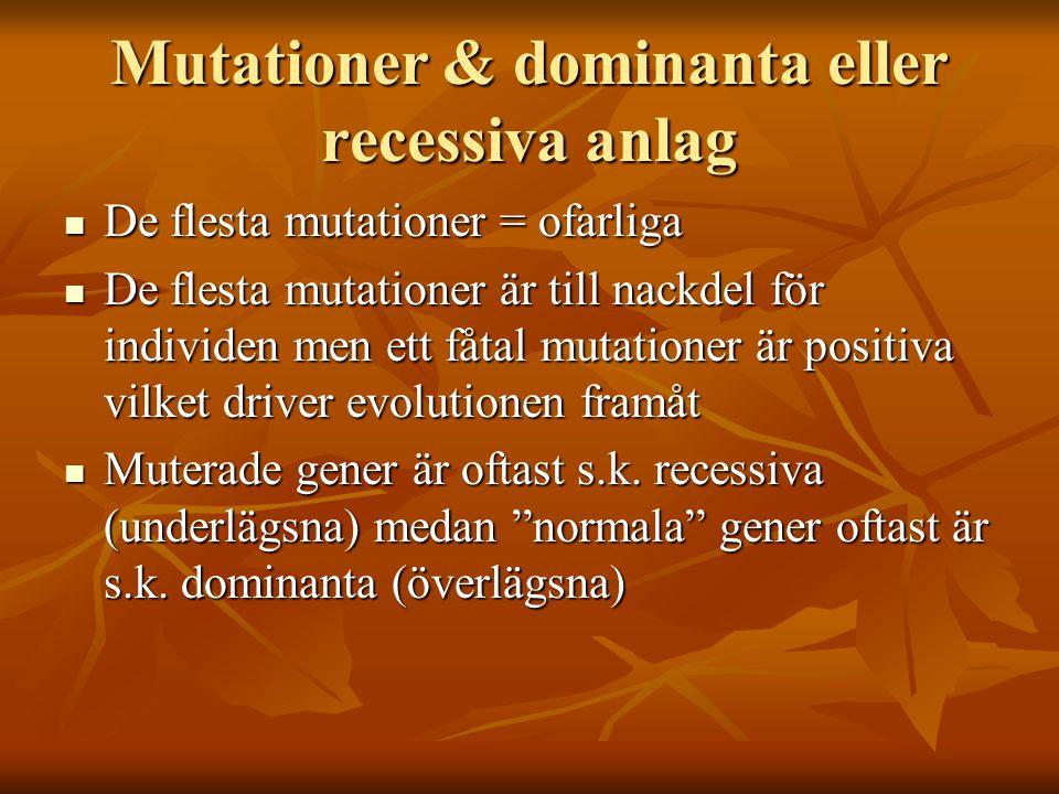 Mutationer & dominanta eller recessiva anlag De flesta mutationer = ofarliga De flesta mutationer = ofarliga De flesta mutationer är till nackdel för individen men ett fåtal mutationer är positiva vilket driver evolutionen framåt De flesta mutationer är till nackdel för individen men ett fåtal mutationer är positiva vilket driver evolutionen framåt Muterade gener är oftast s.k.
