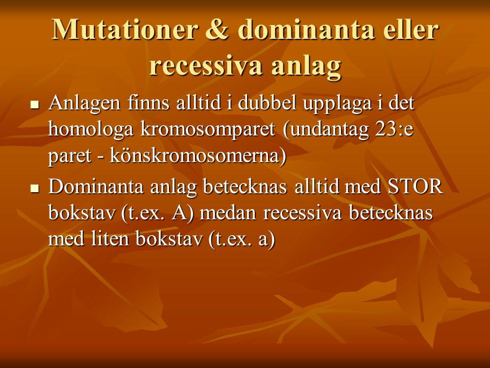 Mutationer & dominanta eller recessiva anlag Anlagen finns alltid i dubbel upplaga i det homologa kromosomparet (undantag 23:e paret - könskromosomern