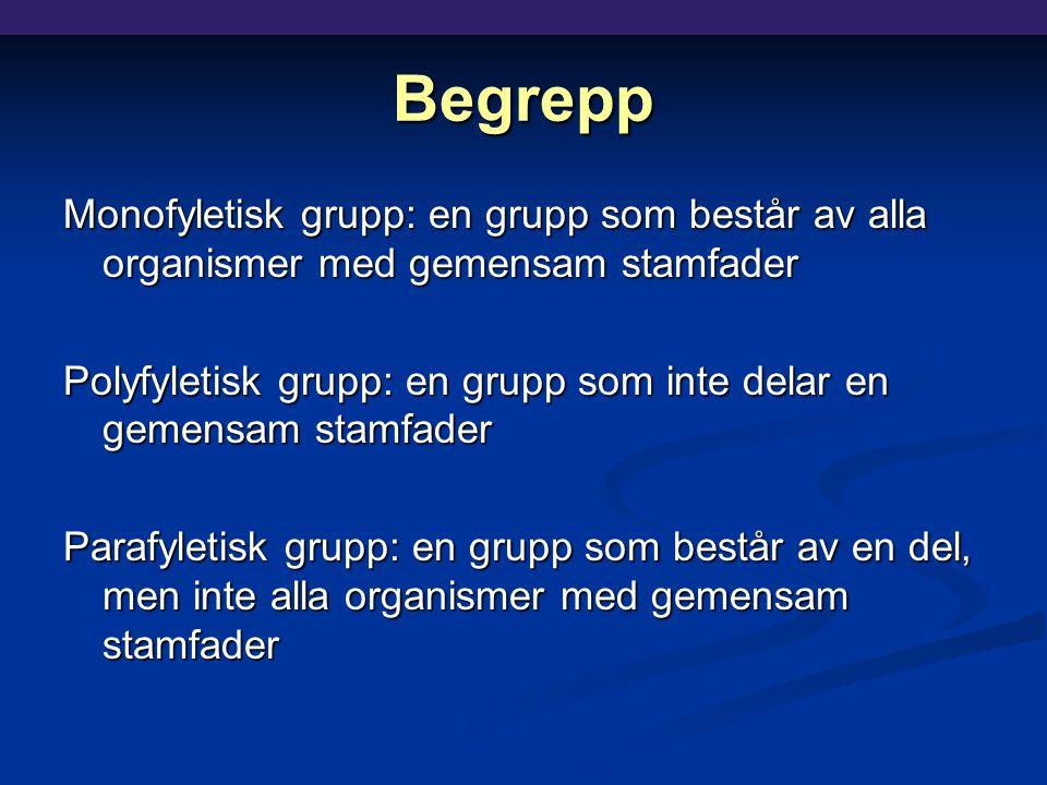Begrepp Monofyletisk grupp: en grupp som består av alla organismer med gemensam stamfader Polyfyletisk grupp: en grupp som inte delar en gemensam stamfader Parafyletisk grupp: en grupp som består av en del, men inte alla organismer med gemensam stamfader