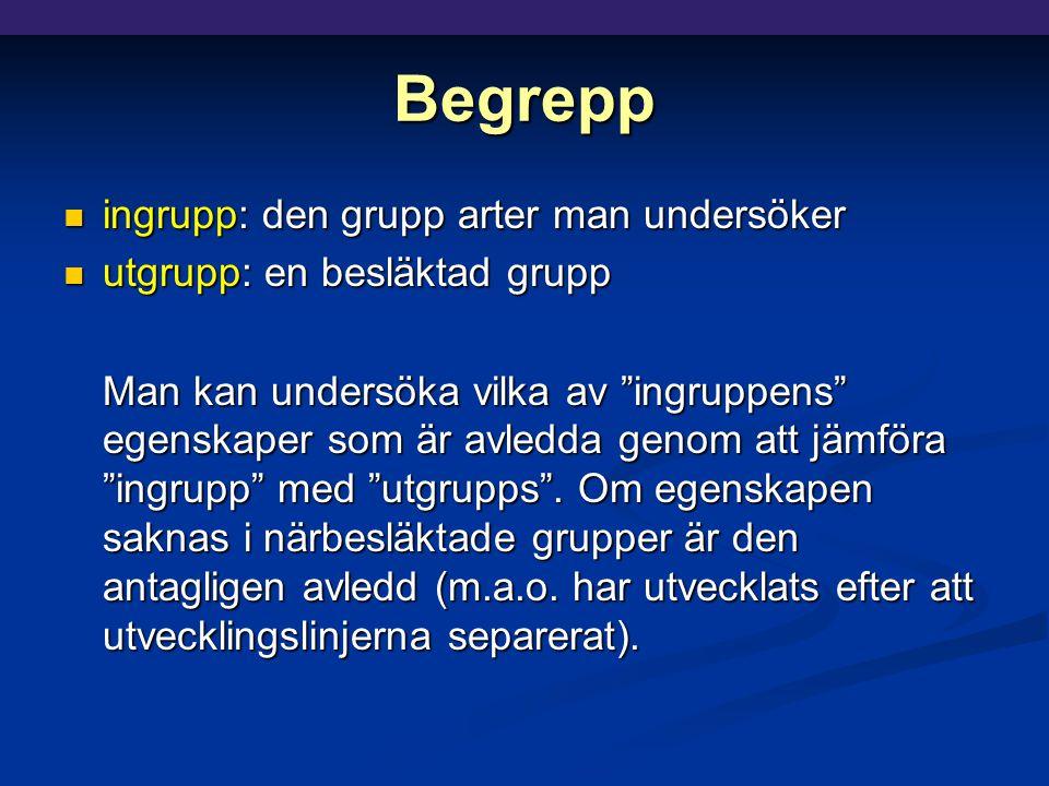 Begrepp ingrupp: den grupp arter man undersöker ingrupp: den grupp arter man undersöker utgrupp: en besläktad grupp utgrupp: en besläktad grupp Man kan undersöka vilka av ingruppens egenskaper som är avledda genom att jämföra ingrupp med utgrupps .