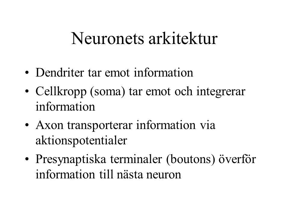 Neuronets arkitektur Dendriter tar emot information Cellkropp (soma) tar emot och integrerar information Axon transporterar information via aktionspotentialer Presynaptiska terminaler (boutons) överför information till nästa neuron