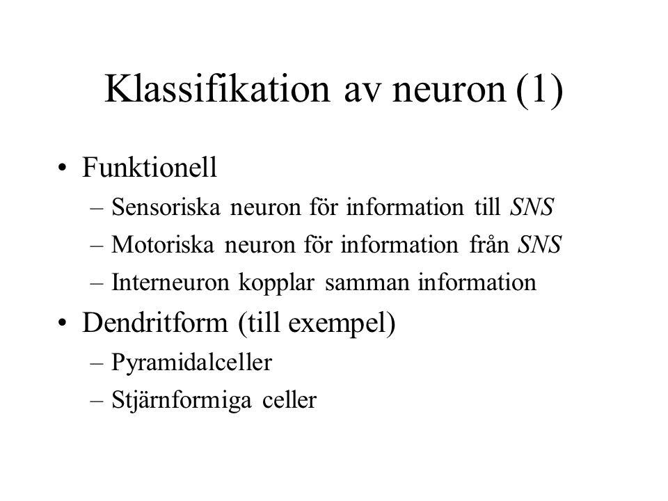 Klassifikation av neuron (1) Funktionell –Sensoriska neuron för information till SNS –Motoriska neuron för information från SNS –Interneuron kopplar samman information Dendritform (till exempel) –Pyramidalceller –Stjärnformiga celler