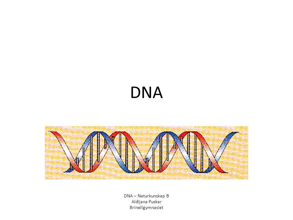 DNA DNA – Naturkunskap B Aldijana Puskar Brinellgymnasiet