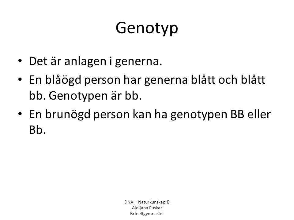 Genotyp Det är anlagen i generna. En blåögd person har generna blått och blått bb. Genotypen är bb. En brunögd person kan ha genotypen BB eller Bb. DN