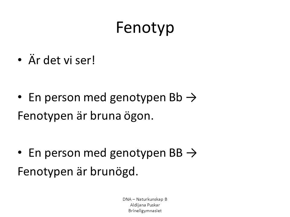Fenotyp Är det vi ser! En person med genotypen Bb → Fenotypen är bruna ögon. En person med genotypen BB → Fenotypen är brunögd. DNA – Naturkunskap B A