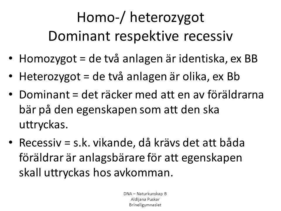 Homo-/ heterozygot Dominant respektive recessiv Homozygot = de två anlagen är identiska, ex BB Heterozygot = de två anlagen är olika, ex Bb Dominant =