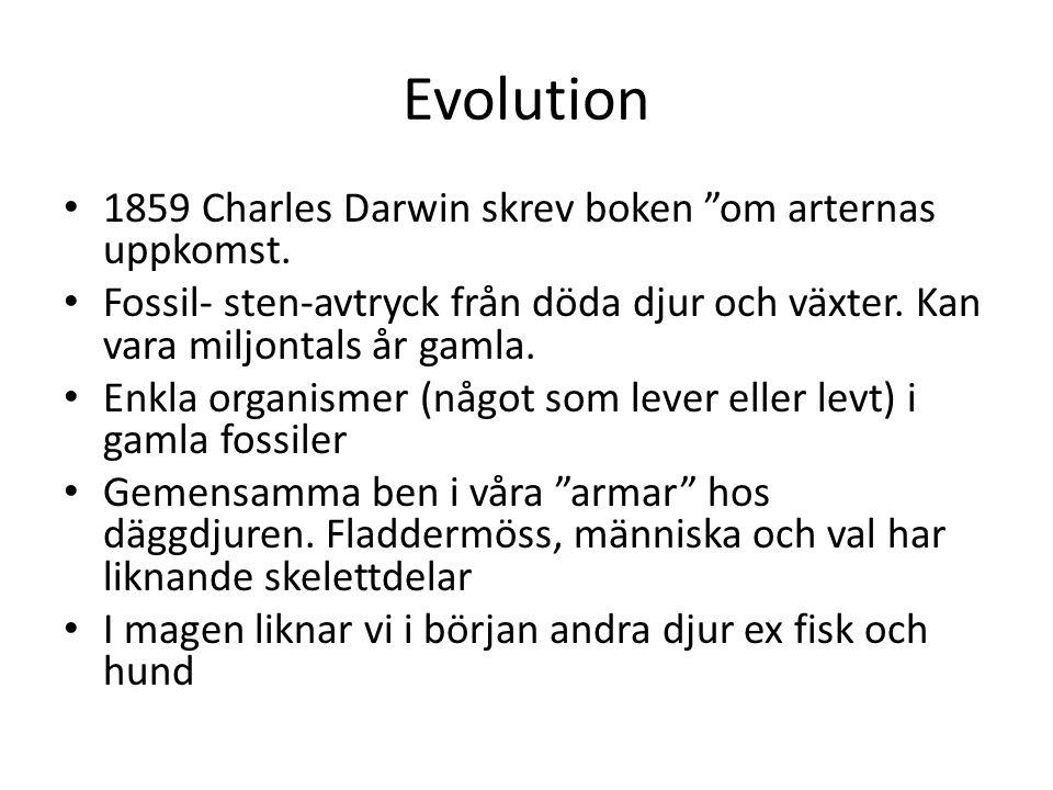 """Evolution 1859 Charles Darwin skrev boken """"om arternas uppkomst. Fossil- sten-avtryck från döda djur och växter. Kan vara miljontals år gamla. Enkla o"""