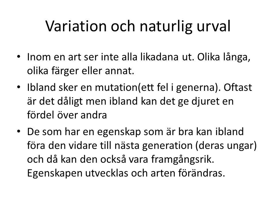 Variation och naturlig urval Inom en art ser inte alla likadana ut. Olika långa, olika färger eller annat. Ibland sker en mutation(ett fel i generna).
