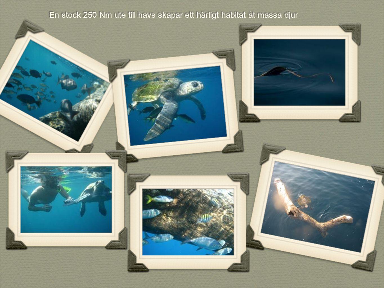 En stock 250 Nm ute till havs skapar ett härligt habitat åt massa djur