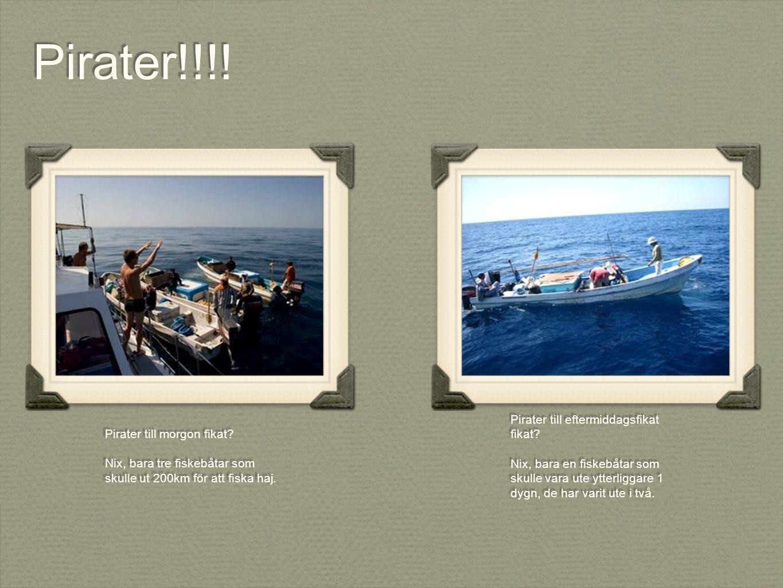 Pirater till morgon fikat. Nix, bara tre fiskebåtar som skulle ut 200km för att fiska haj.