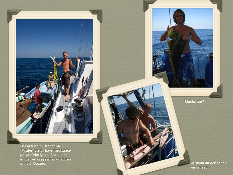 """Det är tur att vi träffar på """"Pirater"""" ute till havs med tanke på vår fiske lycka. Sex öl och ett packet cigg så har vi fått oss en rejäl Dorado. Stor"""