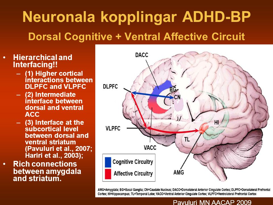 Neuronala kopplingar ADHD-BP Dorsal Cognitive + Ventral Affective Circuit Hierarchical and Interfacing!! –(1) Higher cortical interactions between DLP