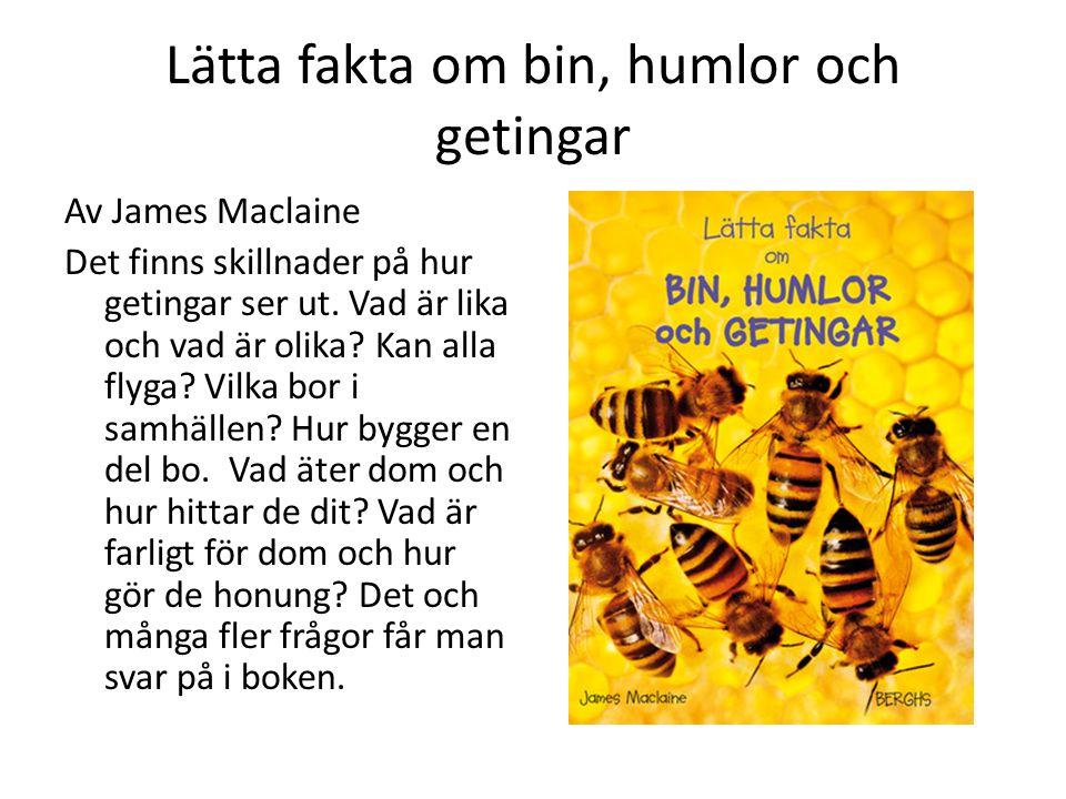 Lätta fakta om bin, humlor och getingar Av James Maclaine Det finns skillnader på hur getingar ser ut.