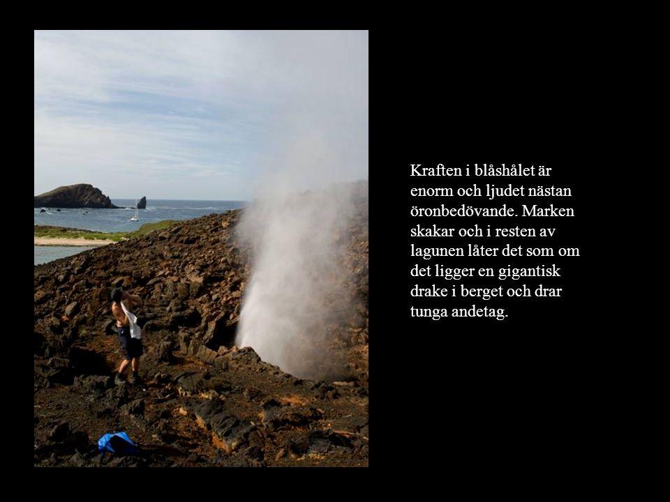 Kraften i blåshålet är enorm och ljudet nästan öronbedövande. Marken skakar och i resten av lagunen låter det som om det ligger en gigantisk drake i b