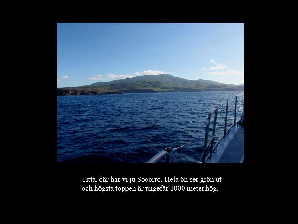 Titta, där har vi ju Socorro. Hela ön ser grön ut och högsta toppen är ungefär 1000 meter hög.