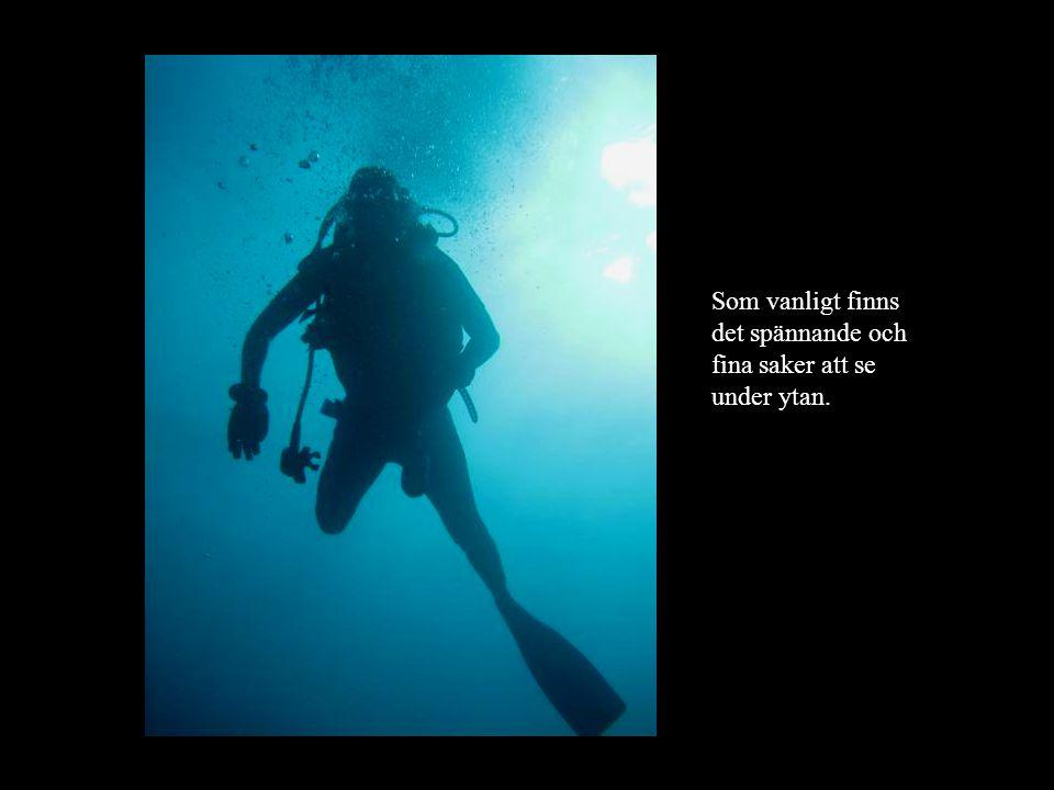 Som vanligt finns det spännande och fina saker att se under ytan.