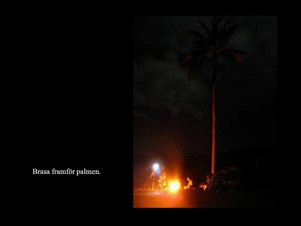 Brasa framför palmen.