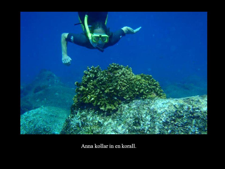 Anna kollar in en korall.