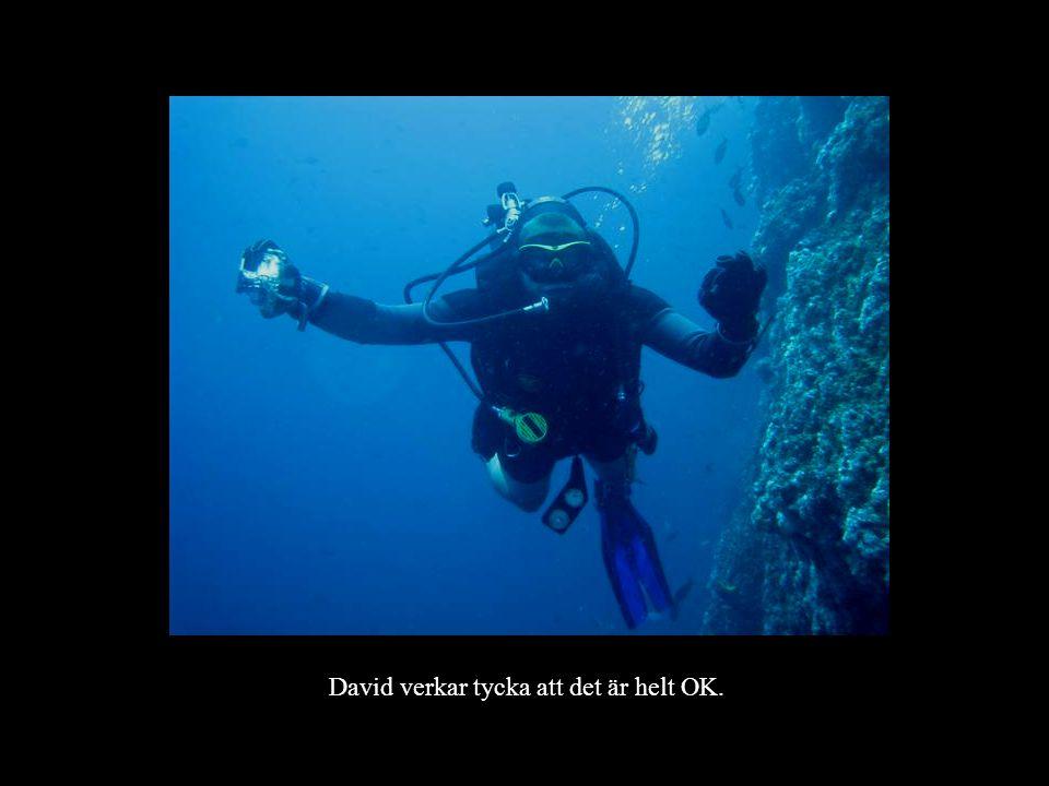 David verkar tycka att det är helt OK.