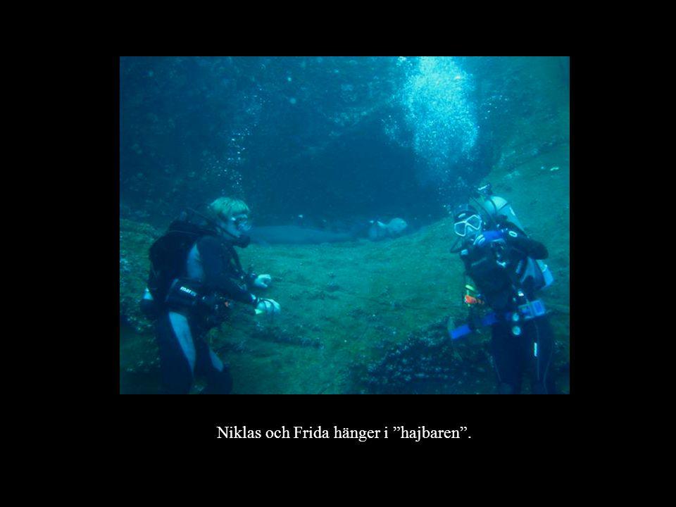 Niklas och Frida hänger i hajbaren .