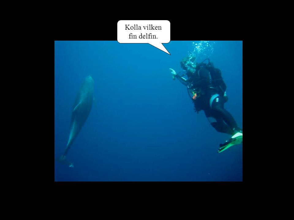 Kolla vilken fin delfin.