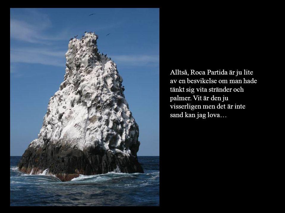 Alltså, Roca Partida är ju lite av en besvikelse om man hade tänkt sig vita stränder och palmer. Vit är den ju visserligen men det är inte sand kan ja