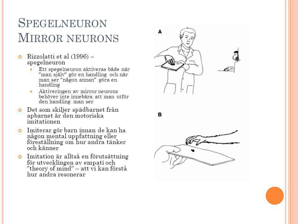 """S PEGELNEURON M IRROR NEURONS Rizzolatti et al (1996) – spegelneuron Ett spegelneuron aktiveras både när """"man själv"""" gör en handling och när man ser """""""