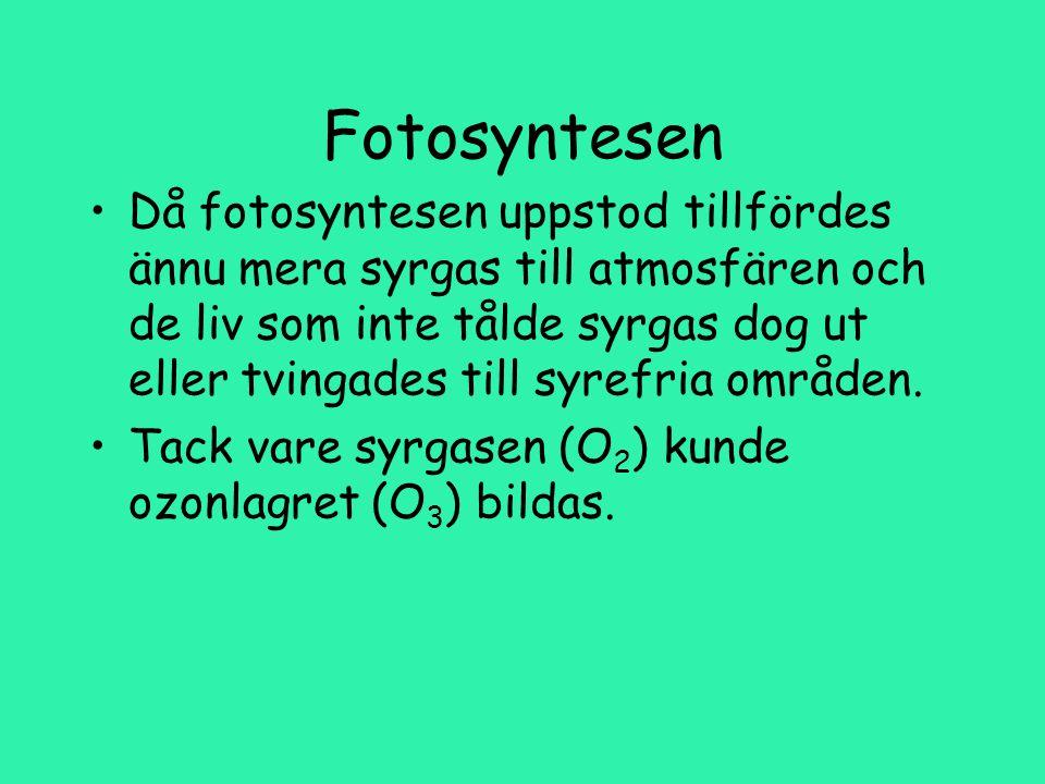 Fotosyntesen Då fotosyntesen uppstod tillfördes ännu mera syrgas till atmosfären och de liv som inte tålde syrgas dog ut eller tvingades till syrefria områden.