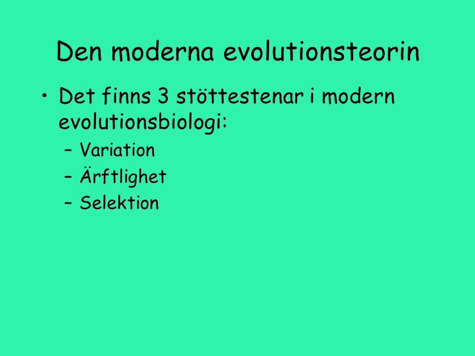 Den moderna evolutionsteorin Det finns 3 stöttestenar i modern evolutionsbiologi: –Variation –Ärftlighet –Selektion