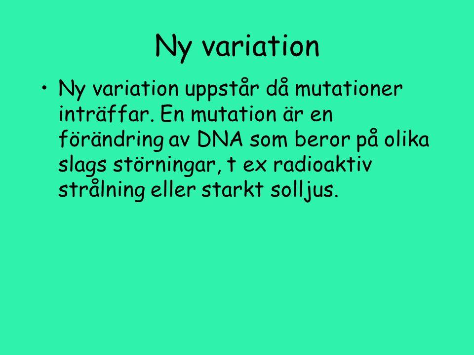 Ny variation Ny variation uppstår då mutationer inträffar.