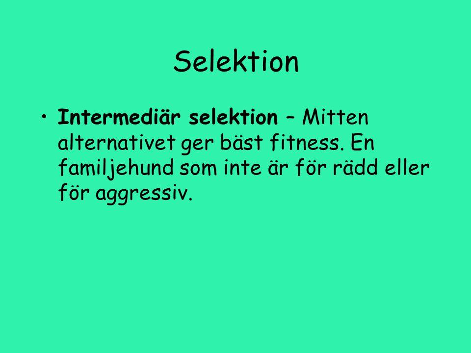 Selektion Intermediär selektion – Mitten alternativet ger bäst fitness.