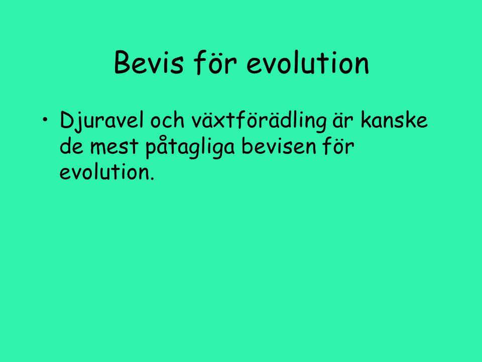 Bevis för evolution Djuravel och växtförädling är kanske de mest påtagliga bevisen för evolution.