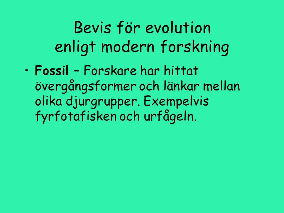 Bevis för evolution enligt modern forskning Fossil – Forskare har hittat övergångsformer och länkar mellan olika djurgrupper.