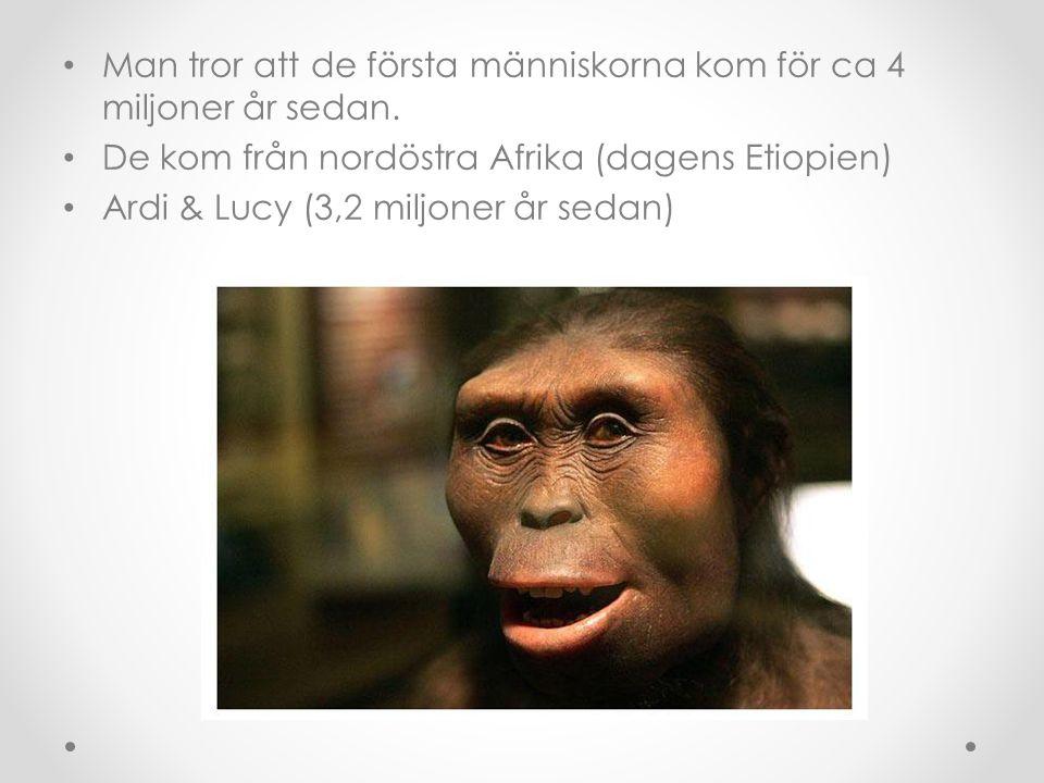Man tror att de första människorna kom för ca 4 miljoner år sedan. De kom från nordöstra Afrika (dagens Etiopien) Ardi & Lucy (3,2 miljoner år sedan)