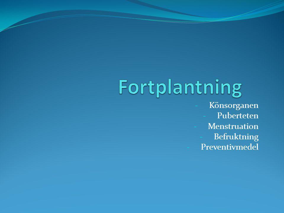 - Könsorganen - Puberteten - Menstruation - Befruktning - Preventivmedel