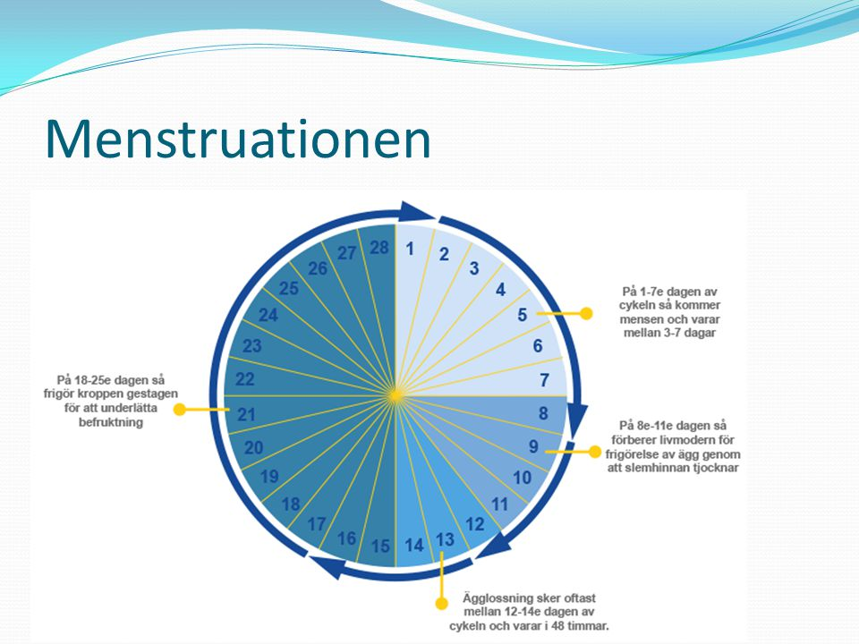 Menstruationen