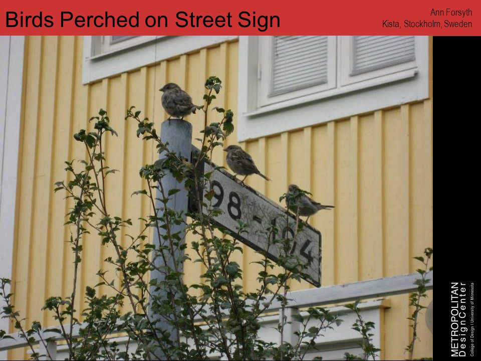 www.designcenter.umn.edu Birds Perched on Street Sign Ann Forsyth Kista, Stockholm, Sweden