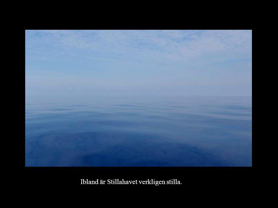 Ibland är Stillahavet verkligen stilla.
