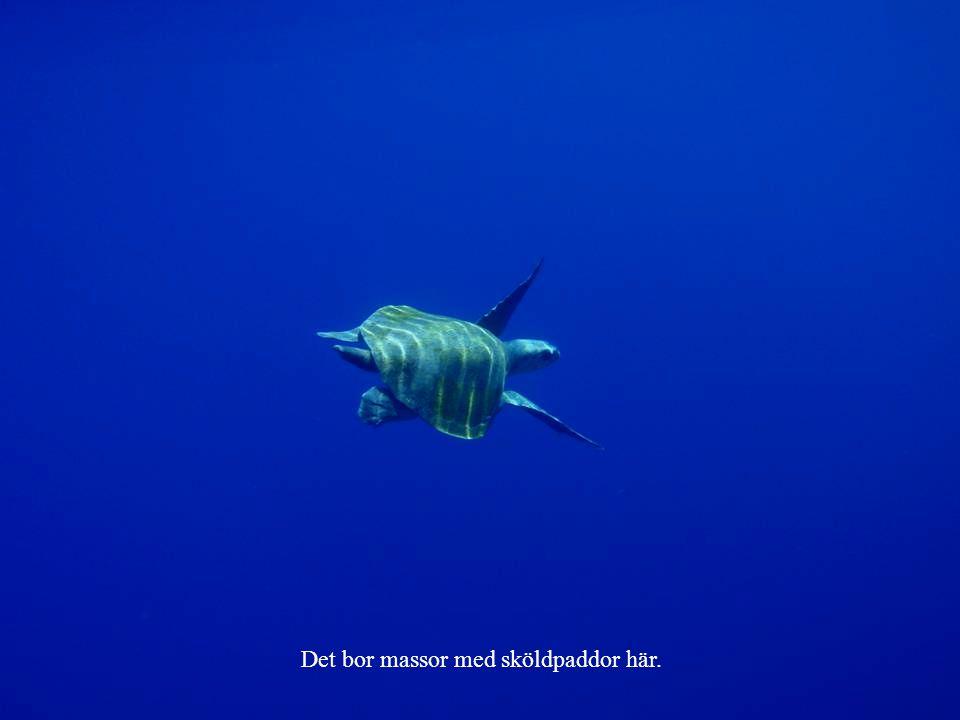 Det bor massor med sköldpaddor här.