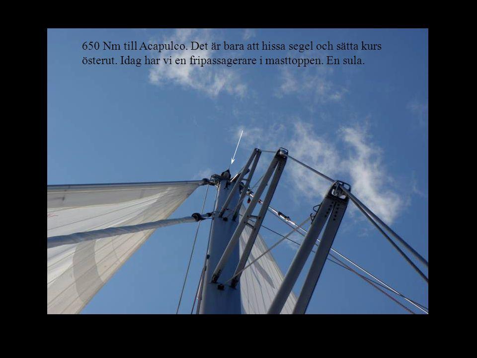 650 Nm till Acapulco. Det är bara att hissa segel och sätta kurs österut.