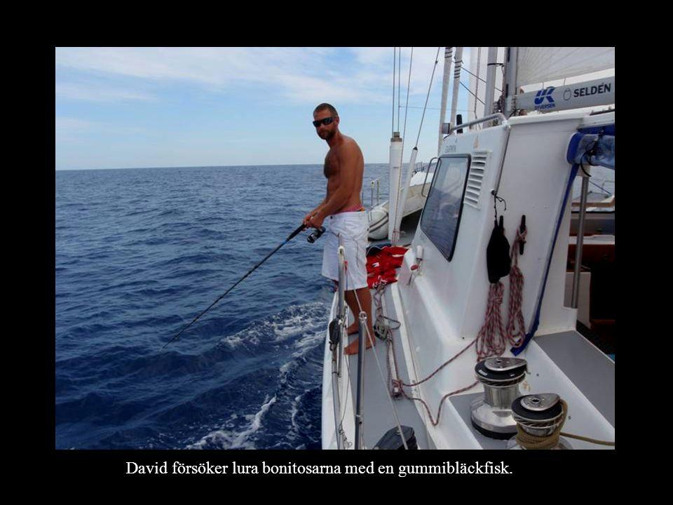 David försöker lura bonitosarna med en gummibläckfisk.