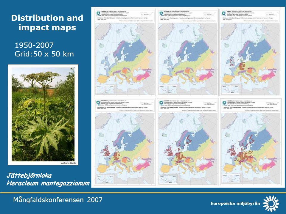 Europeiska miljöbyrån Mångfaldskonferensen 2007 Distribution and impact maps Jättebjörnloka Heracleum mantegazzianum 1950-2007 Grid:50 x 50 km