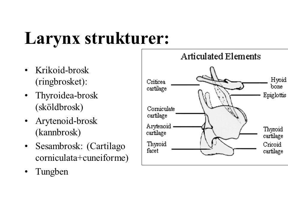 Larynx strukturer: Krikoid-brosk (ringbrosket): Thyroidea-brosk (sköldbrosk) Arytenoid-brosk (kannbrosk) Sesambrosk: (Cartilago corniculata+cuneiforme