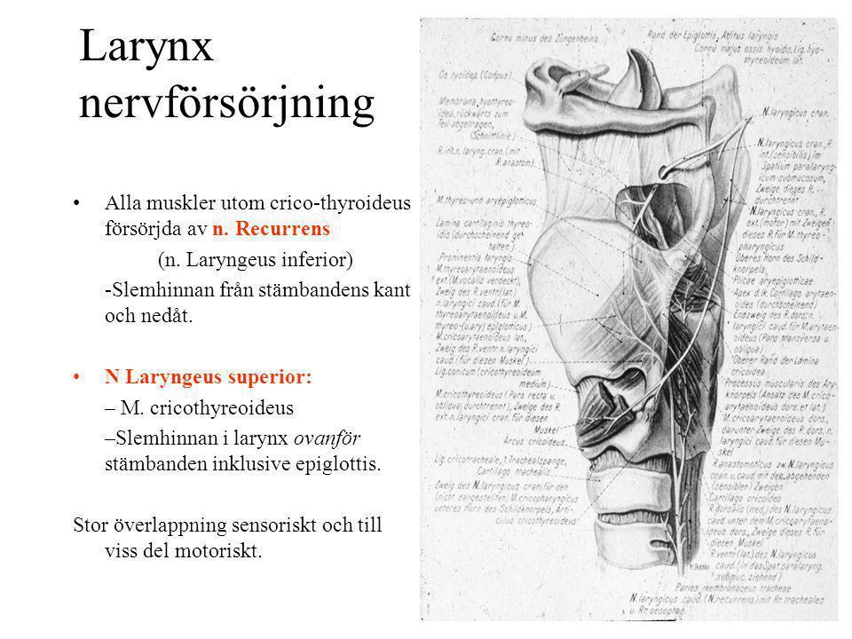 Larynx nervförsörjning Alla muskler utom crico-thyroideus försörjda av n. Recurrens (n. Laryngeus inferior) -Slemhinnan från stämbandens kant och nedå