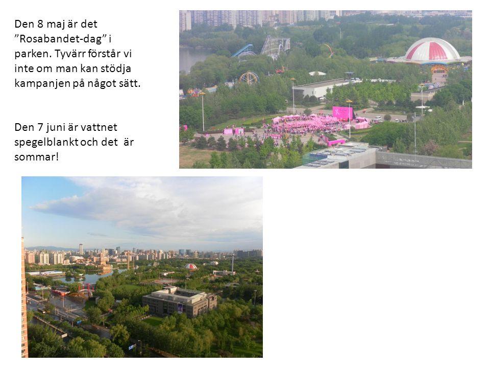 """Den 8 maj är det """"Rosabandet-dag"""" i parken. Tyvärr förstår vi inte om man kan stödja kampanjen på något sätt. Den 7 juni är vattnet spegelblankt och d"""