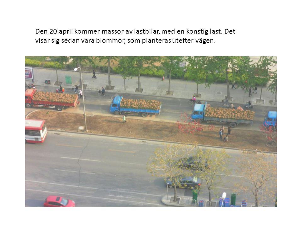 Den 20 april kommer massor av lastbilar, med en konstig last. Det visar sig sedan vara blommor, som planteras utefter vägen.