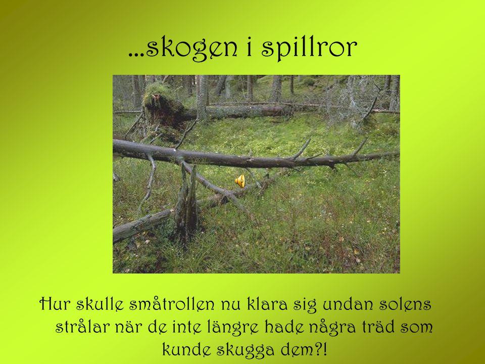 …skogen i spillror Hur skulle småtrollen nu klara sig undan solens strålar när de inte längre hade några träd som kunde skugga dem?!