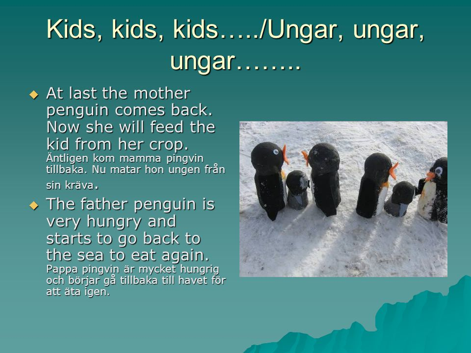 Kids, kids, kids…../Ungar, ungar, ungar……..  At last the mother penguin comes back.