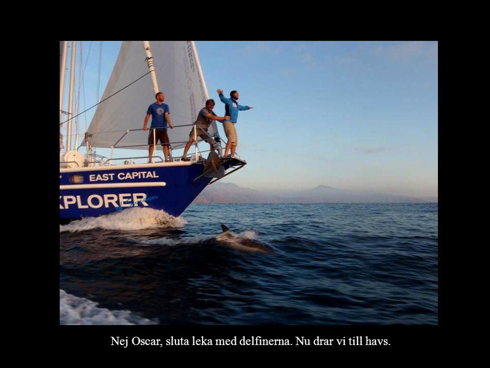 Nej Oscar, sluta leka med delfinerna. Nu drar vi till havs.